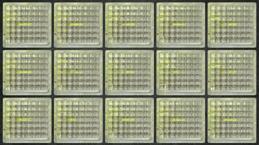 MartinaWolf_GlassBlocks_Thistle_Rep-Grid-8sec_VIDEO_2020-2021_V-2